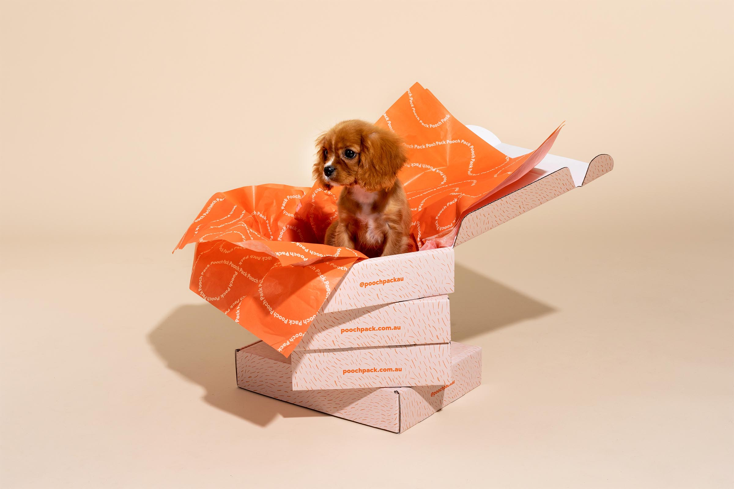 Pooch packaging design