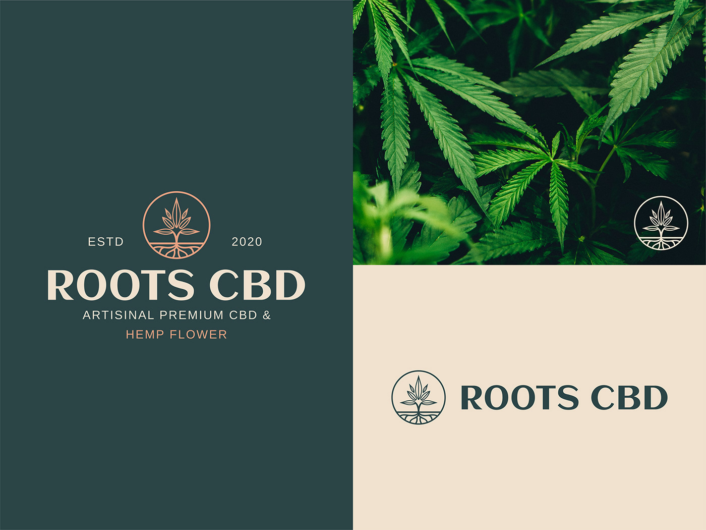 Roots CBD logo construction